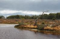 Mare d'une tourbière de la Patagonie
